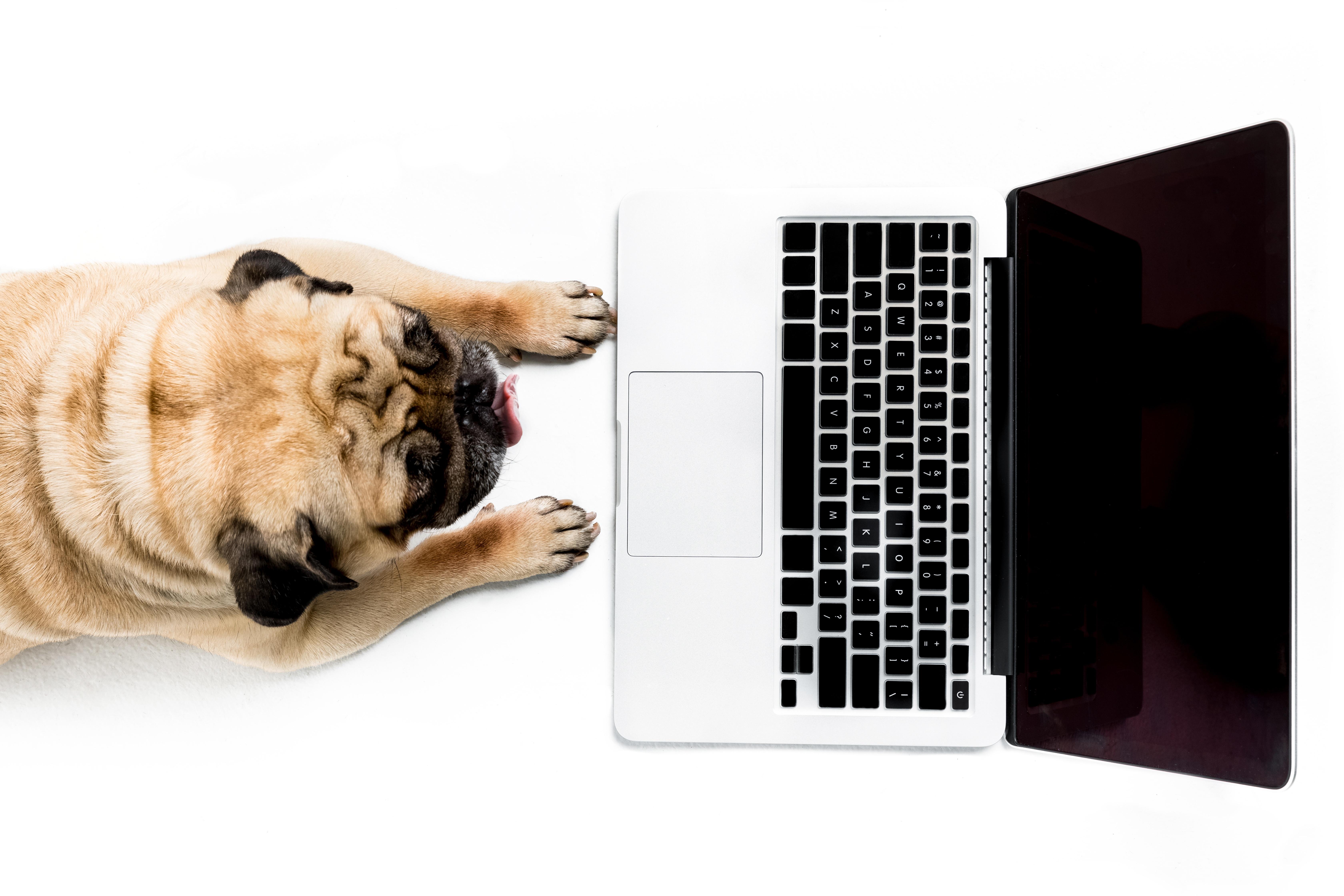 identity access management - IAM - dog